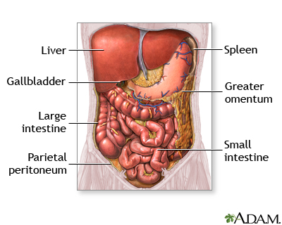 Hie multimedia abdominal organs abdominal organs ccuart Image collections