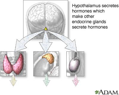 Endocrine System Information